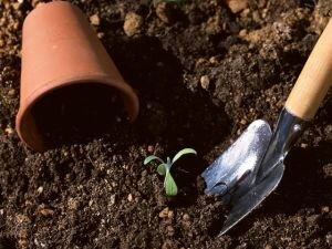 土壌の保水性イメージ